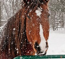 Horse In Snow Storm by Michael Cummings