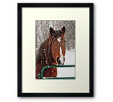 Horse In Snow Storm Framed Print
