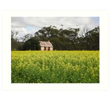 Canola cottage Art Print