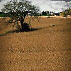 Tree in farmer's field by Theodore Black