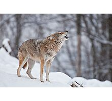 Howling Good Time Photographic Print
