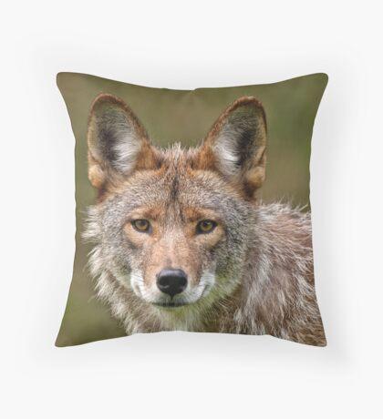 Coyote Portrait  Throw Pillow