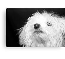 Maltese Pup Canvas Print