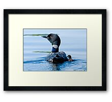 Adult Loon and Baby - Mississippi Lake, Ontario Framed Print