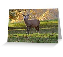Young Stag - Red Deer Greeting Card