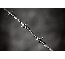 'barbed' Photographic Print