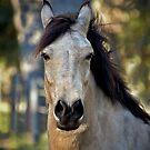 Horse - Biskit by Dejezza