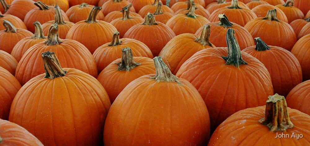 Pumpkin Patch by John Ayo