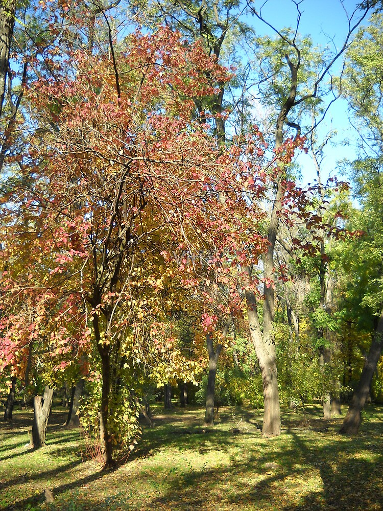 Autumn in the Park. by Vitta
