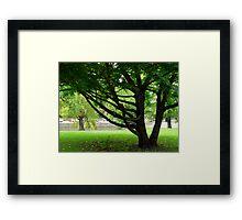 """""""Ash Drazil"""" Framed Print"""