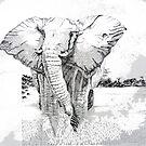 Bull Elephant by Sue Nichol