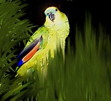 MY JAZZ... The Singer!!..got to watch the parrot singing by Sherri     Nicholas