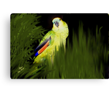 MY JAZZ... The Singer!!..got to watch the parrot singing Canvas Print