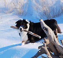 Snow boy Odin by Diane  Kramer