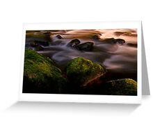 Beautiful Moss and golden Light.........Black Forest Greeting Card