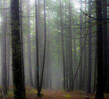 Misty Trail - Acadia National Park by David Clayton