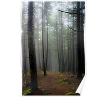 Misty Trail - Acadia National Park Poster