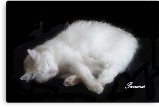 PRECIOUS, ,,MY BEAUTIFUL RESCUED KITTY f..FUNNY SUNDAY....KITTY VIDEO by Sherri     Nicholas