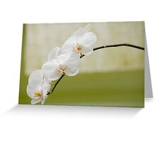 "Phalaenopsis ""Brother White Windian"" Greeting Card"