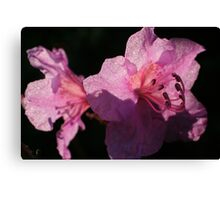 Soft flower petals shining in the sun Canvas Print