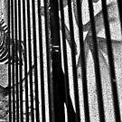 Zebra by Nayko