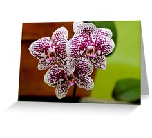 "Phalaenopsis ""Everspring Fairly"" Greeting Card"