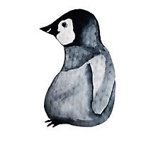 Wooly Penguin Photographic Print