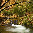Water Swirl in a Mountain Creek by NCBobD