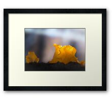 Yellow jelly like a candle Framed Print