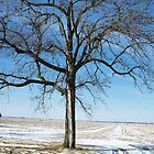 A Winter Prairie Landscape by Mona Gainey-Lanier