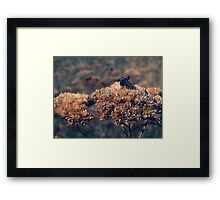 Sexual Intercourse / Wild World Framed Print