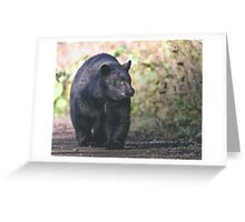Young Adult Black Bear Greeting Card