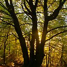 Autumn Woods by Mike  Waldron