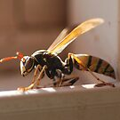 Wasp Oct 2010 by Barbara Anderson
