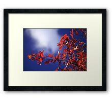 Red, blue Framed Print
