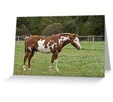 Rodney - Silver Creek Ranch, Ottawa, Ont Greeting Card