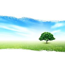 Summer, Field, Sky, Tree, Grass, Flowers by Olga Altunina