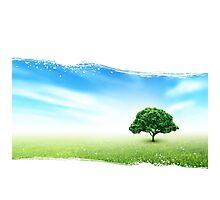 Summer, Field, Sky, Tree, Grass, Flowers Photographic Print