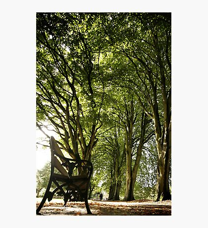 Park Bench Photographic Print