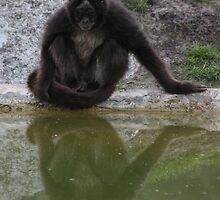 Animal Portraits IX - The Spider Monkey by Britta Döll