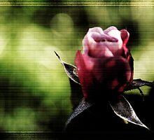 Soft Rose Weave by FeeBeeDee