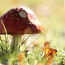 Fly Agaric by SpiralPrints