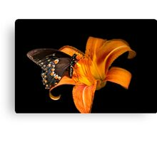 Black Beauty Butterfly Canvas Print