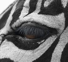 Zebra's Eye by Britta Döll