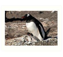 Antarctica gentoo penguin breeding chicks Art Print