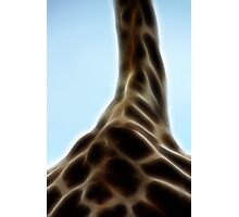 Her Highness - The Giraffe Photographic Print