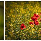 Poppy diptych by Rose Atkinson