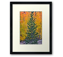 Do You Think They Will Notice? Framed Print
