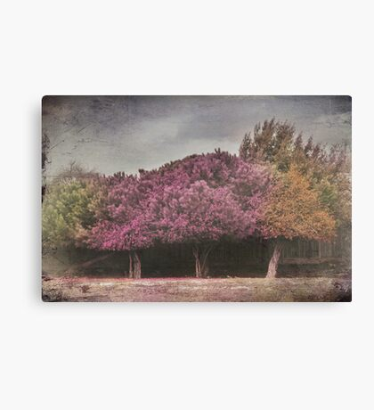 When You Used to Love Me Canvas Print