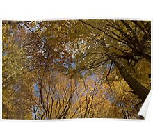 Autumn Colors Poster